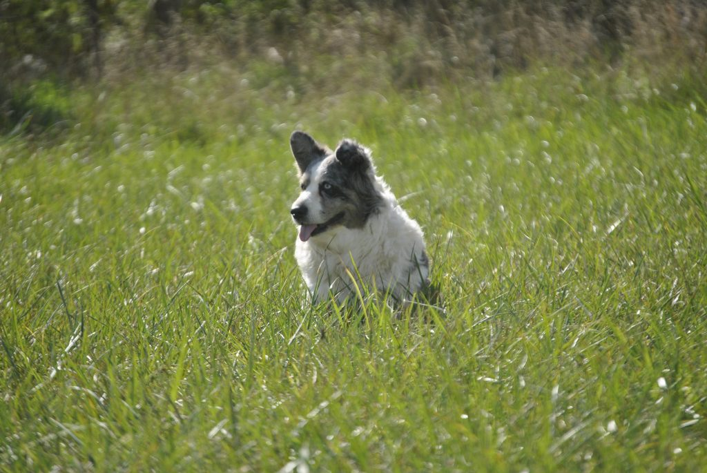 What To Do When Your Dog Is Limping