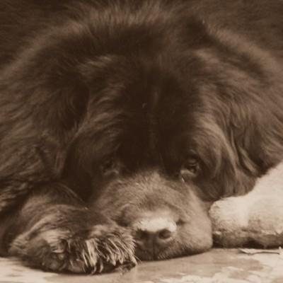 A Mysterious Dog Illness Moving Through Ohio Has Me Concerned