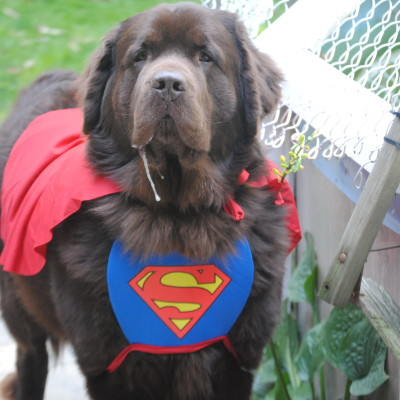 Pet Halloween Contests That Are Spooktacular!
