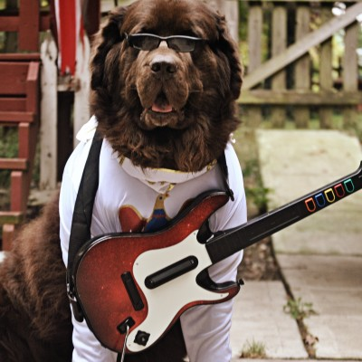 I Lied And I'm Sorry. He Ain't Nothin But A Hound Dog