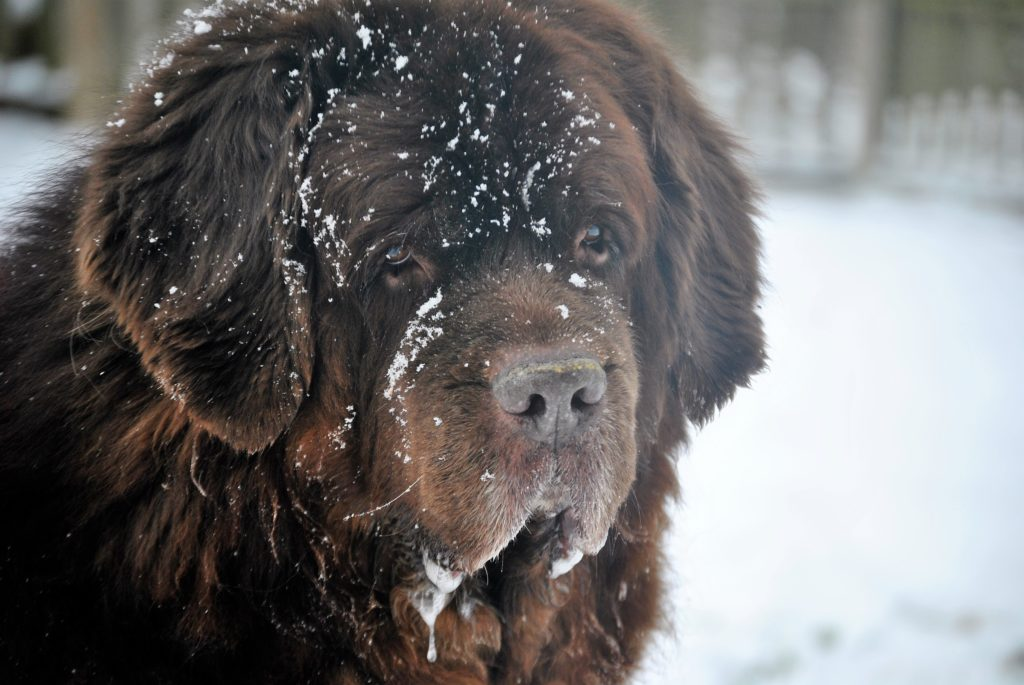 dog drooling in the snow
