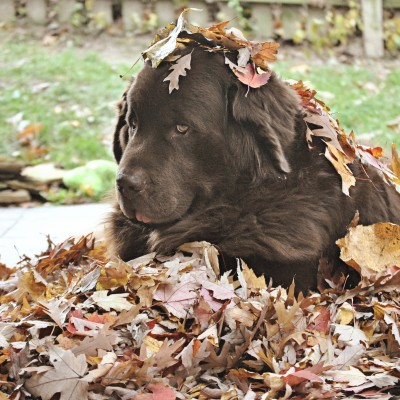 Why I Took Leaves From My Parents And Now I'm Taking Them Back