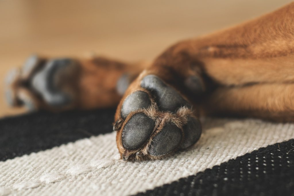 Keep your dog's paws safe these winter by using pet safe deicers, paw balm and removing snow and ice that builds up on their paws when outside.