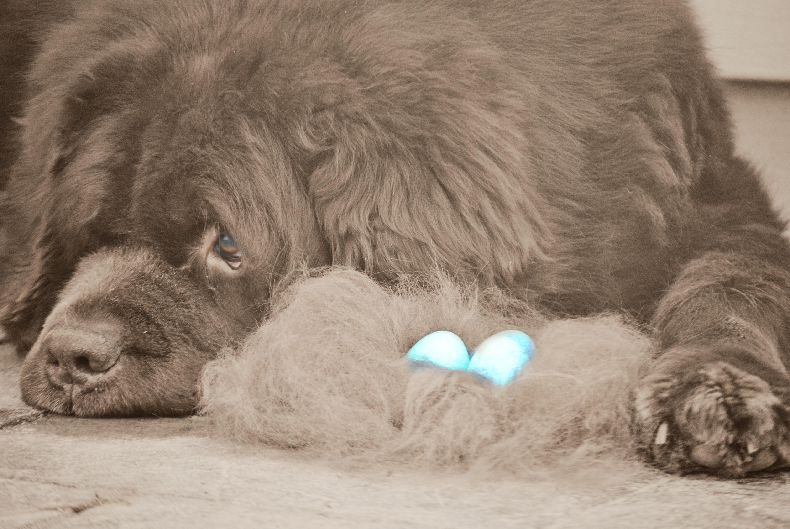 Lions den adult toys