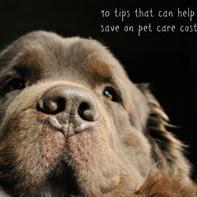 10 Easy Ways To Save On Pet Care Costs