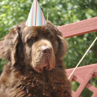 Happy 6th Birthday Leroy