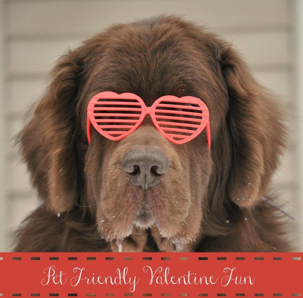 Cheap and easy Valentine's Day Dog Photos