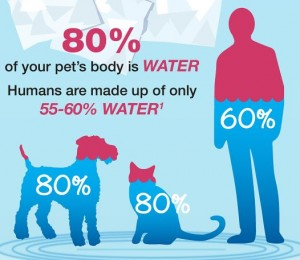 Is Your Dog Getting Enough Water?