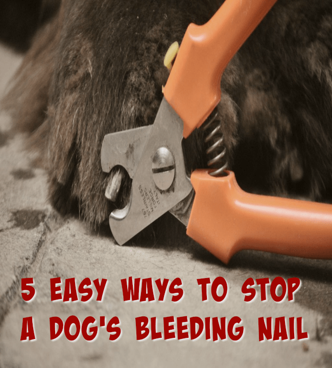 5 easy way to stop a dog's bleeding nail