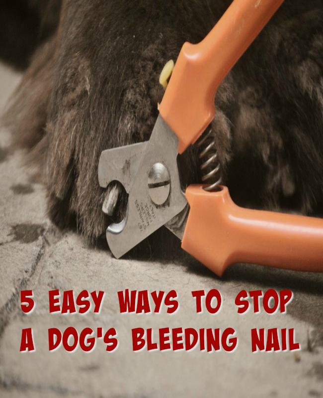 5 Easy Ways To Stop A Dog\'s Bleeding Nail - mybrownnewfies.com