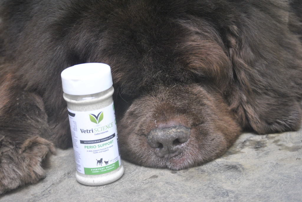 Supporting Senior Dog Teeth With Perio Support From VetriScience