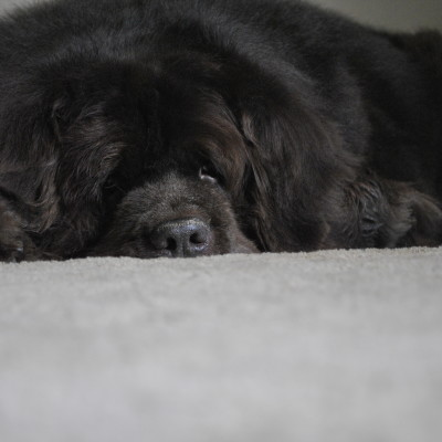 8 Ways You Can Help Manage Arthritis In Senior Dogs