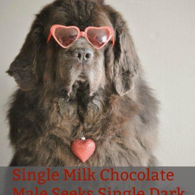 Single Brown Milk Chocolate Hunk Seeks Single Brown Dark Chocolate Female