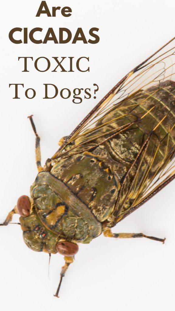 cicada in ohio in 2016