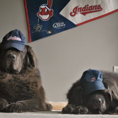Helpful Tips On Taking Your Dog To The Ballpark