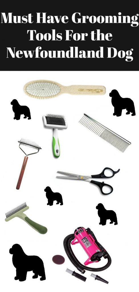 Must Have Grooming Tools For The Newfoundland Dog