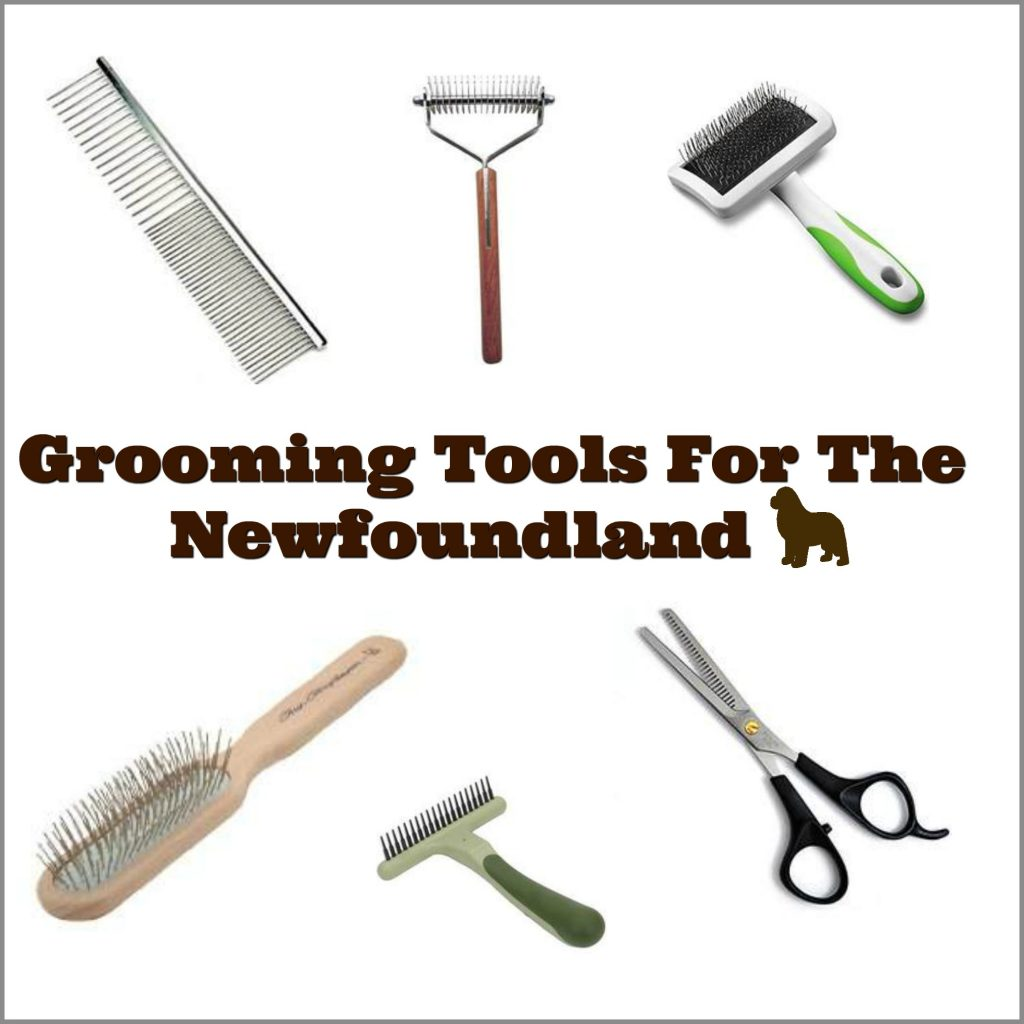 Newfoundland Dog Grooming Tools