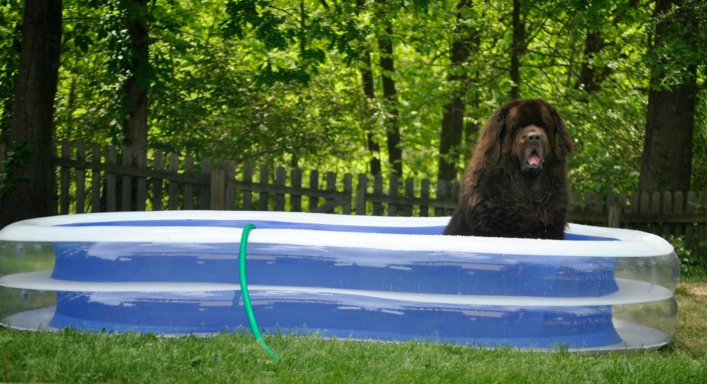 Sherman in his new pool