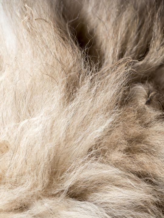 how to tell if your dog has a double coat image