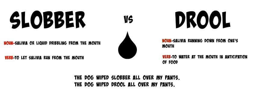 dog slobber vs dog drool