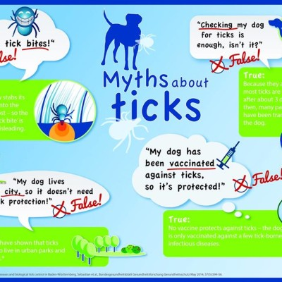 4 Common Myths About Dogs and Ticks