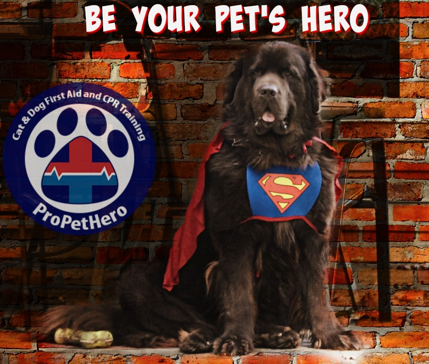 Be Your Pets Hero By Learning Pet Cpr And First Aid Training Online