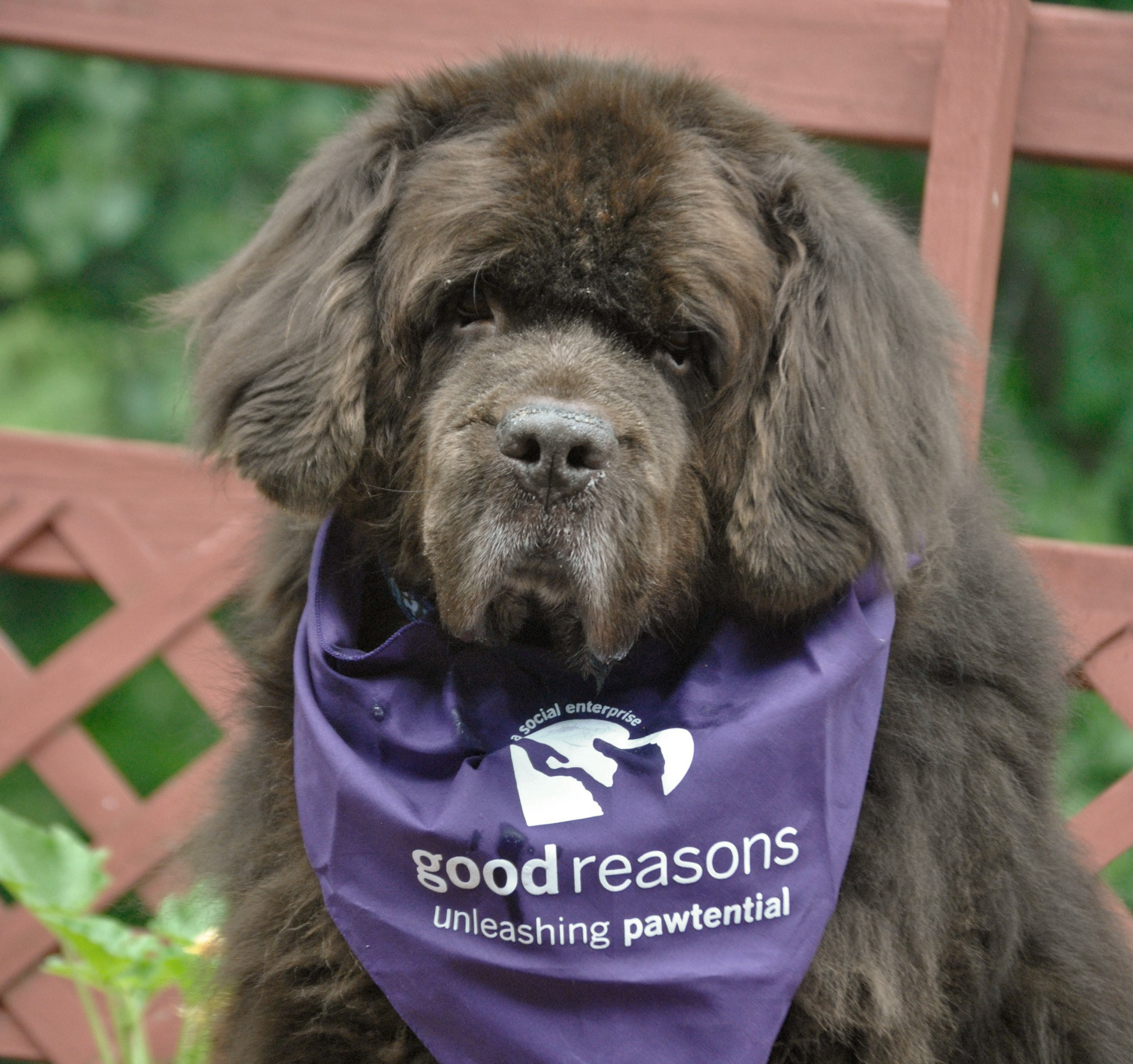 Treats For Dogs With Dietary Restrictions