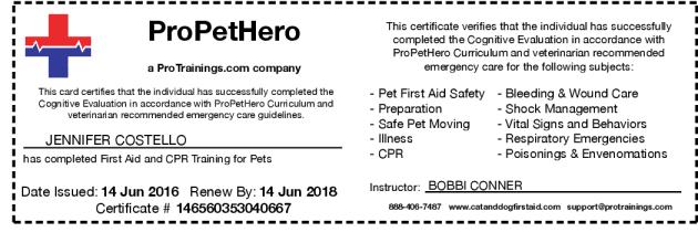 Be Your Pet\'s Hero By Learning Pet CPR and First Aid Training Online ...