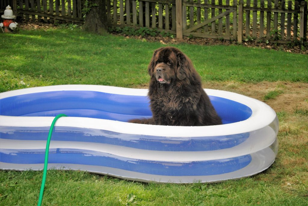 8 Easy Ways To Keep Dogs Cool During The Summer
