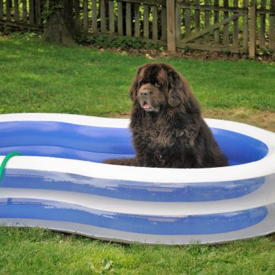 How To Easily Repair Your Dog's Inflatable Pool