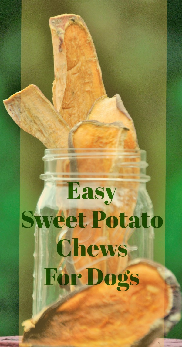 Easy To Make Sweet Potato Dog Chews. Sweet potatoes are packed with vitamins and nutrients and they can be a great, low-fat treat for your dog. They're also super easy to make!