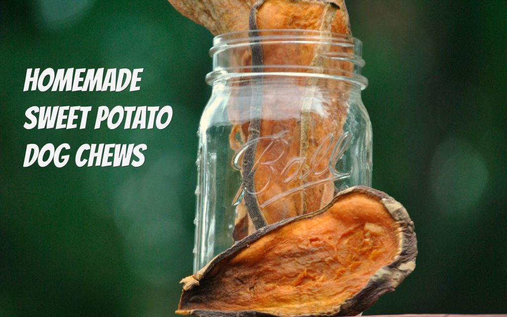 Easy to make dehydrated sweet potato chews for dogs