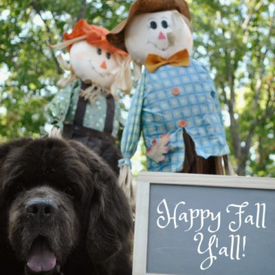 10 Tips For Taking Fantastic Fall Pictures Of Your Dog