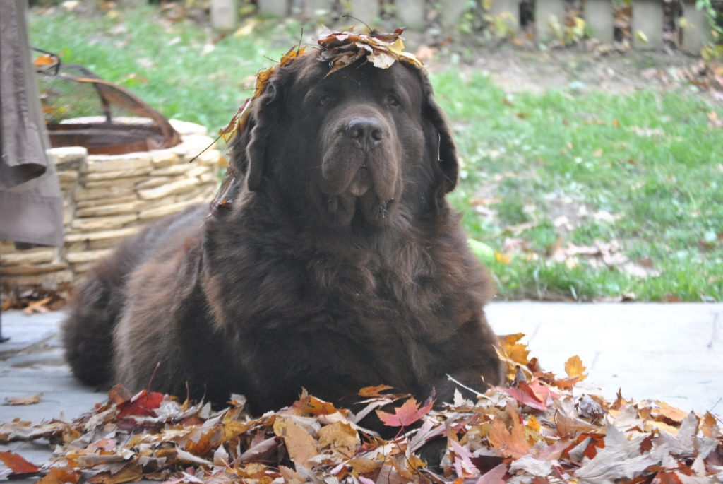 10 DANGERS MY DOGS COME ACROSS IN AUTUMN