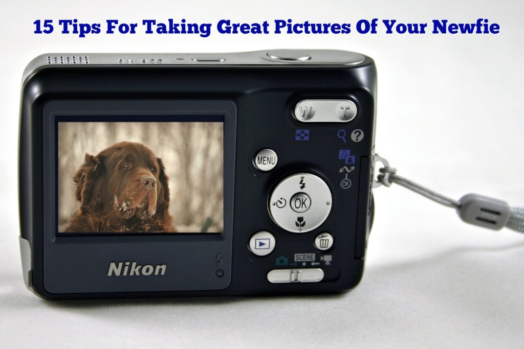 15 Tips For Taking Great Pictures Of Your Newfie