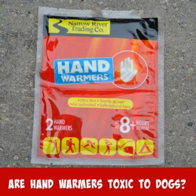 Are Hand Warmers Toxic To Dogs?
