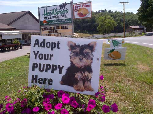 Photo courtesy of The Puppy Mill Project