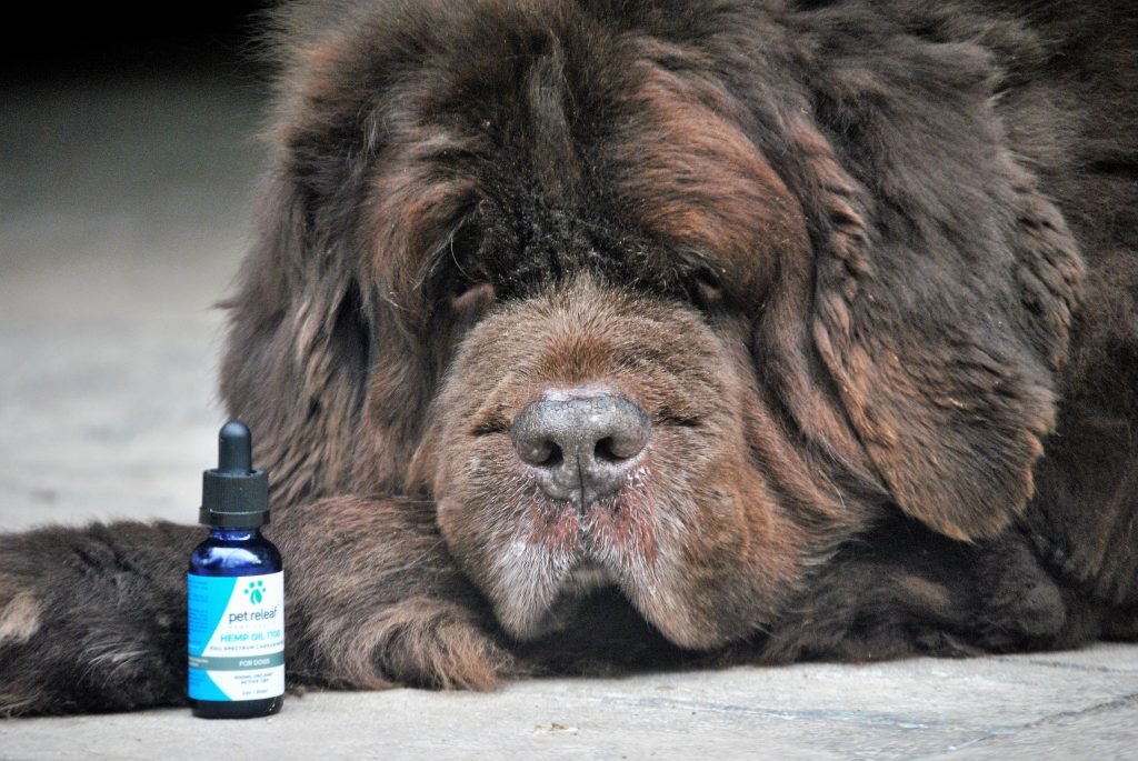 What You Should Know Before Giving Your Dog CBD Hemp Oil