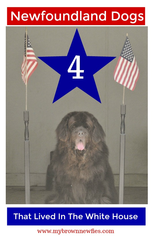 Newfoundland dogs that lived in the White House