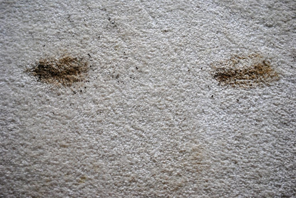 The Easiest Way To Instantly Remove Muddy Paw Print Stains From Carpet This Spring.
