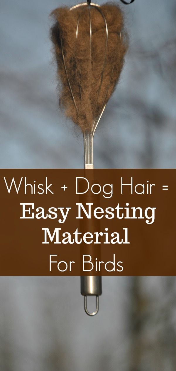 This spring help the birds build their nests by offering them easy to use materials such as dog hair, twigs and leaves. The wire whisk makes it easy for the birds to grab and easy to hang.