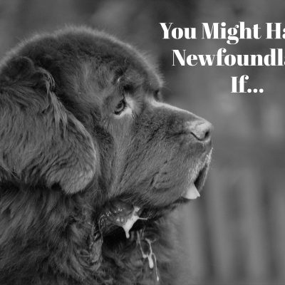 You Might Have A Newfoundland If……..