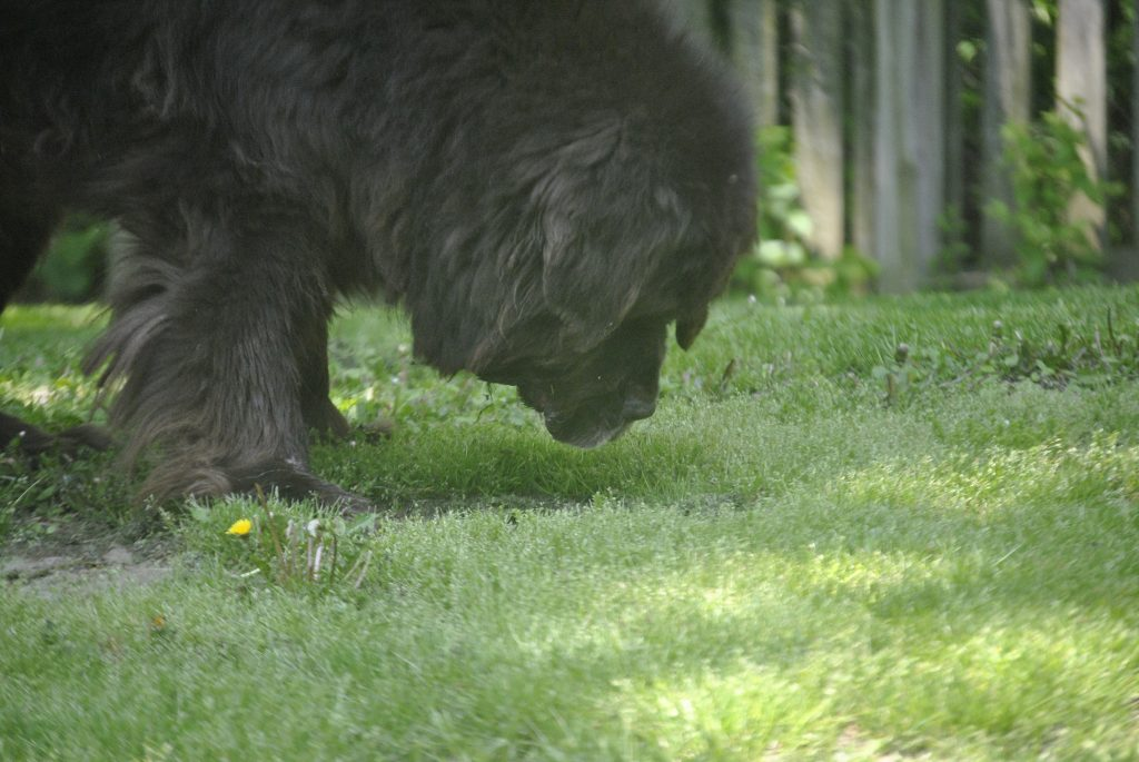 Why Do Some Dogs Eat Grass?