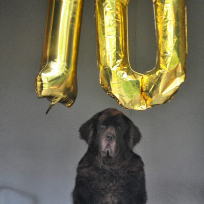 10 Years Of Life With Leroy