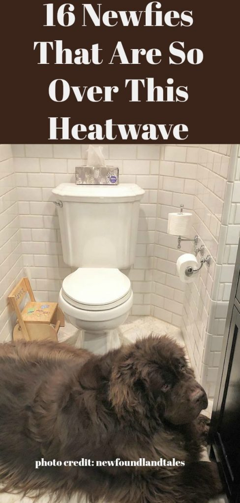 16 Newfies That Are So Over This Heatwave