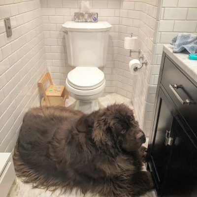 16 Newfies That Are So Over This Heat Wave