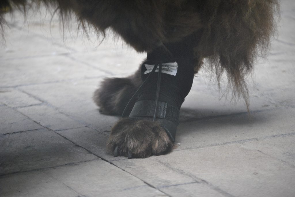 No-Knuckle Training Sock for dogs that knuckle when they walk.