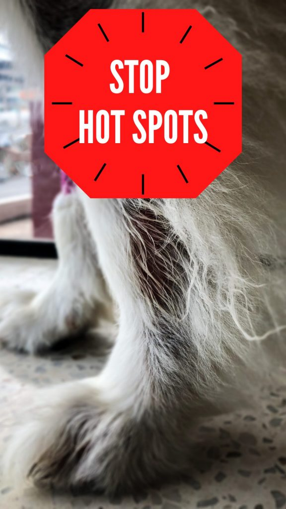 how to treat and prevent hot spots on your dog