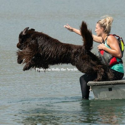 20 Newfoundlands That Are Training To Save Your Life
