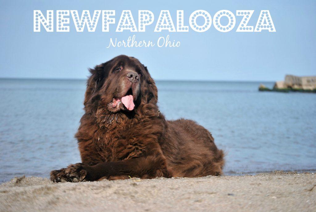 Northern Ohio Newfapalooza 2018